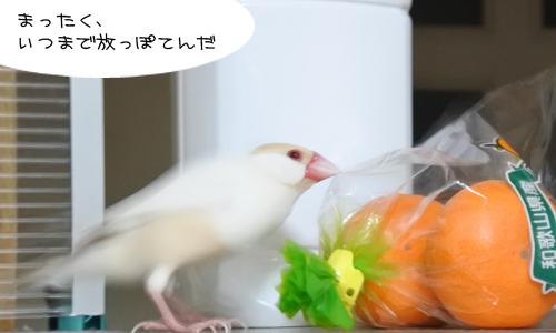 おみかん会議_1
