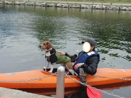 8カヌー犬桃太郎 2013.4.20