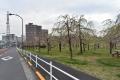200327荒川区桜