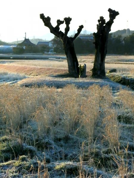 霜の朝02