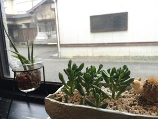 自家焙煎珈琲店 草木舎 多肉植物
