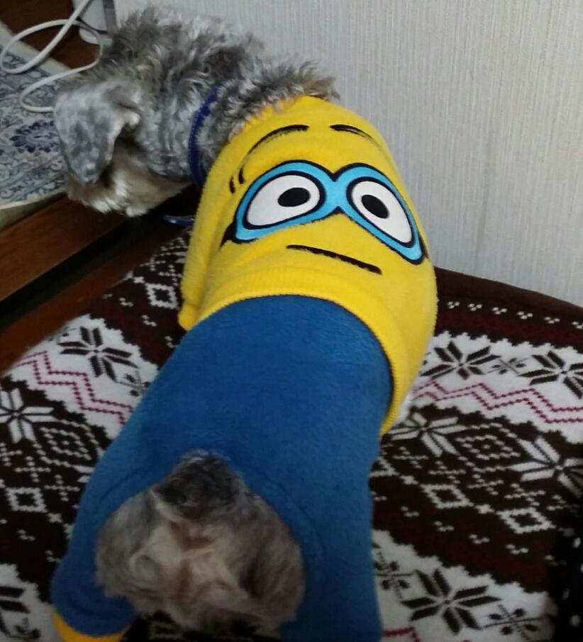 顎変形症外科矯正始めます日々のネタ 韓国で犬の服 ミニオンズ