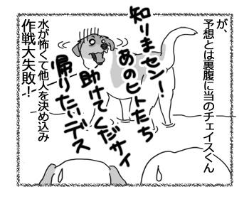 羊の国のラブラドール絵日記シニア!!「作戦大失敗!」4