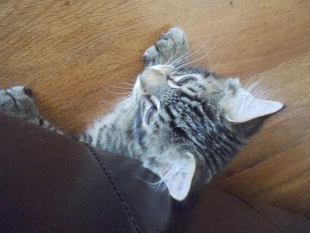 羊の国のラブラドール絵日記シニア1!「テオテオファームの働き猫たち」5