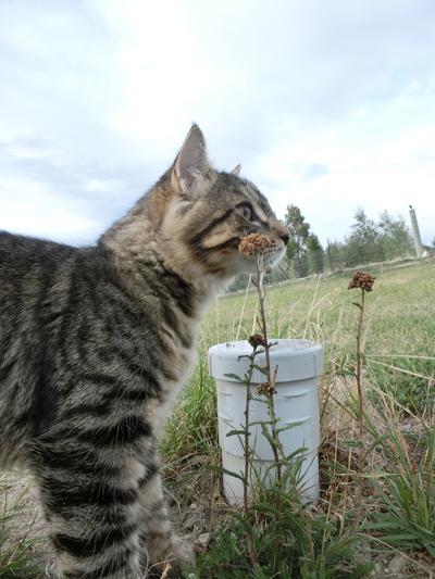 羊の国のラブラドール絵日記シニア!!「子猫アーネストの成長」5