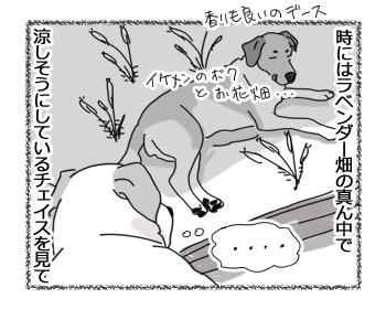 羊の国のラブラドール絵日記シニア!!「コピー・キャットの失敗」2