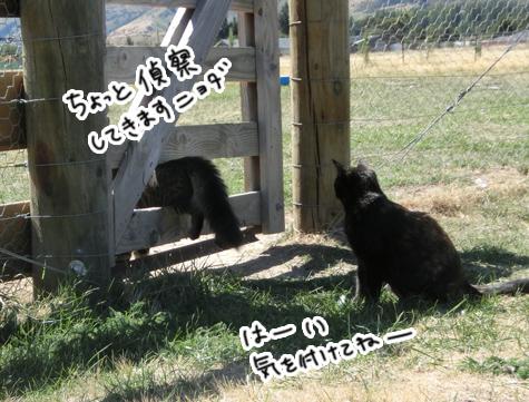 羊の国のラブラドール絵日記シニア!!「好奇心炸裂!」1