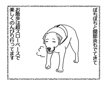 羊の国のラブラドール絵日記シニア!!「お散歩それぞれの速度」3