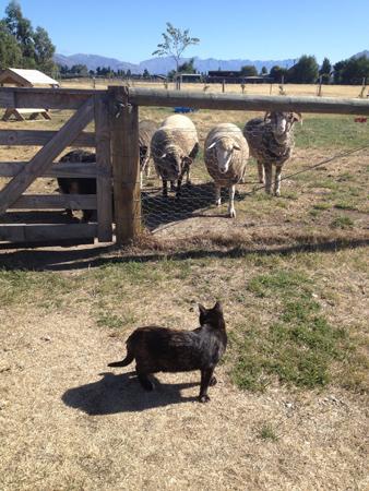 羊の国のラブラドール絵日記シニア!!「お外中毒」5