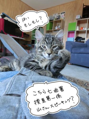 羊の国のラブラドール絵日記シニア!!「災い転じて・・・ひょっとして?」猫写真1