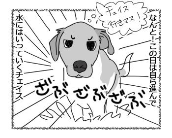 羊の国のラブラドール絵日記シニア!!「顔はやめてくだサーイ」2