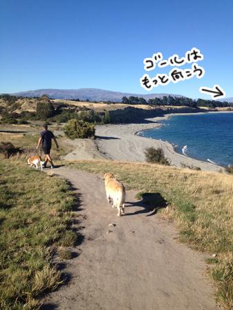 羊の国のラブラドール絵日記シニア!!「犬散歩、猫散歩」1