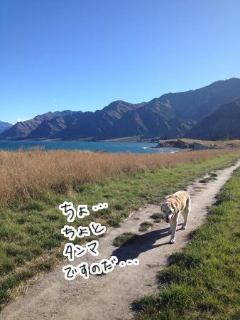 羊の国のラブラドール絵日記シニア!!「犬散歩、猫散歩」3