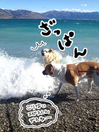 羊の国のラブラドール絵日記シニア!!「犬散歩、猫散歩」4