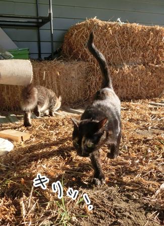 羊の国のラブラドール絵日記シニア!!「犬散歩、猫散歩」5