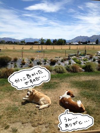 羊の国のラブラドール絵日記シニア!!「チェイスが泳いだ!」3