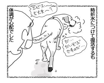 羊の国のラブラドール絵日記シニア!!「ファイトー!いっぱぁつ!」2