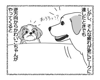 羊の国のラブラドール絵日記シニア!!「ファイトー!いっぱぁつ!」3