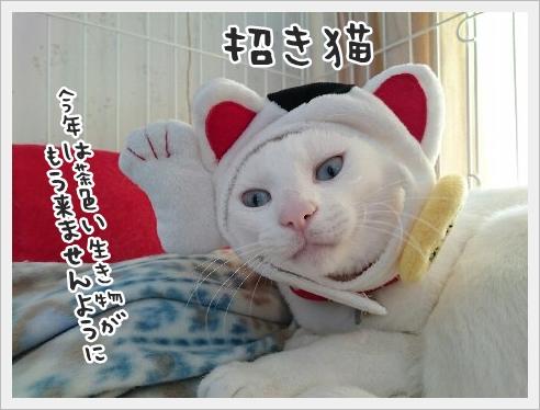 fc2_2016-01-05_02.jpg