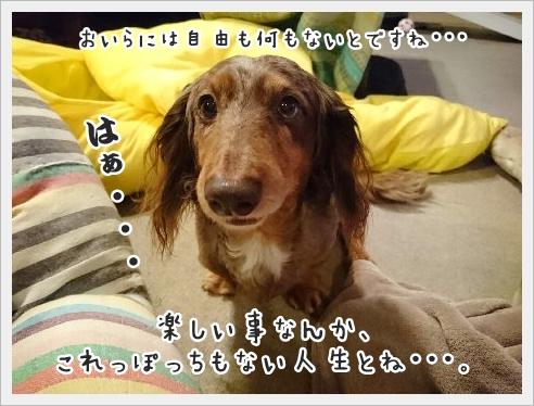 fc2_2016-01-29_03.jpg