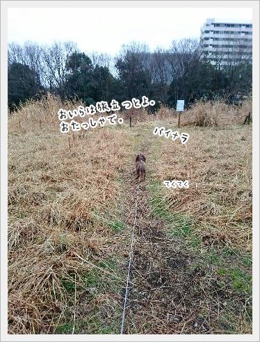 fc2_2016-02-03_01.jpg