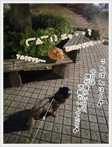 fc2_2016-02-05_04.jpg