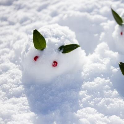 幻の冬っていうあたり、詩的なセンスを感じます
