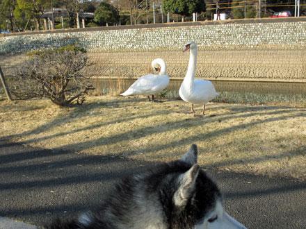 水戸の大晦日散歩