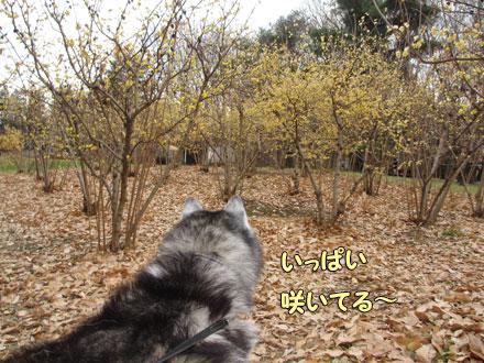 野川公園でイイ香り