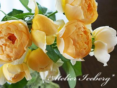 rose2015_167.jpg