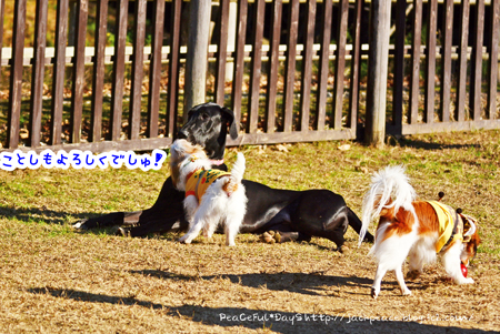 160101_yuasa2.jpg