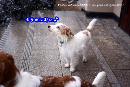 160124_yuki3.jpg