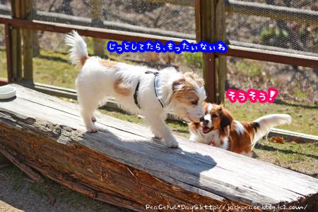 160303_yuasa16.jpg