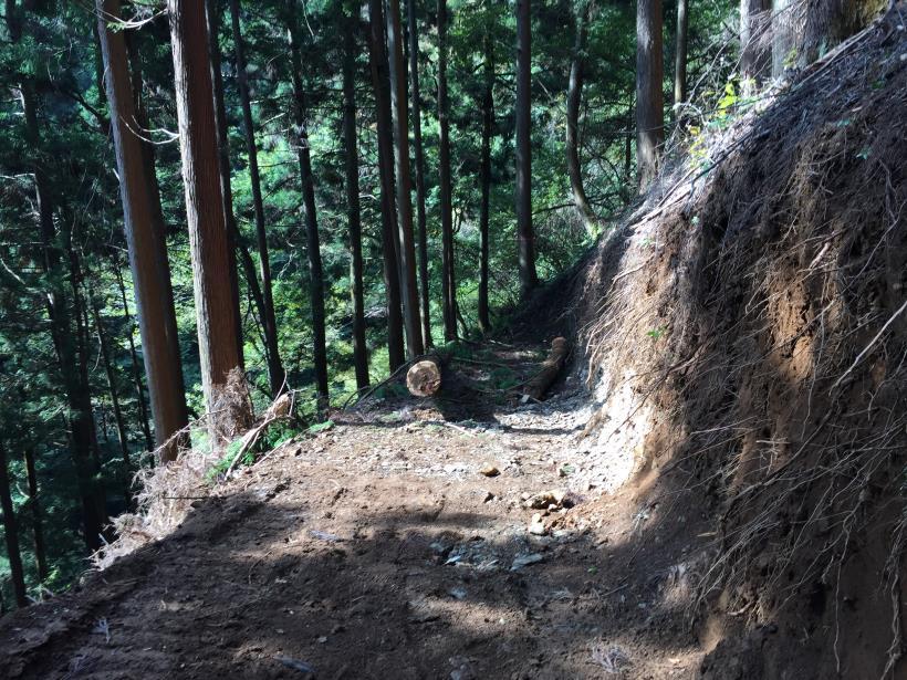 kosakashimisouha72.jpg