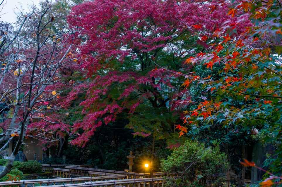 20151123太田金龍寺の紅葉12