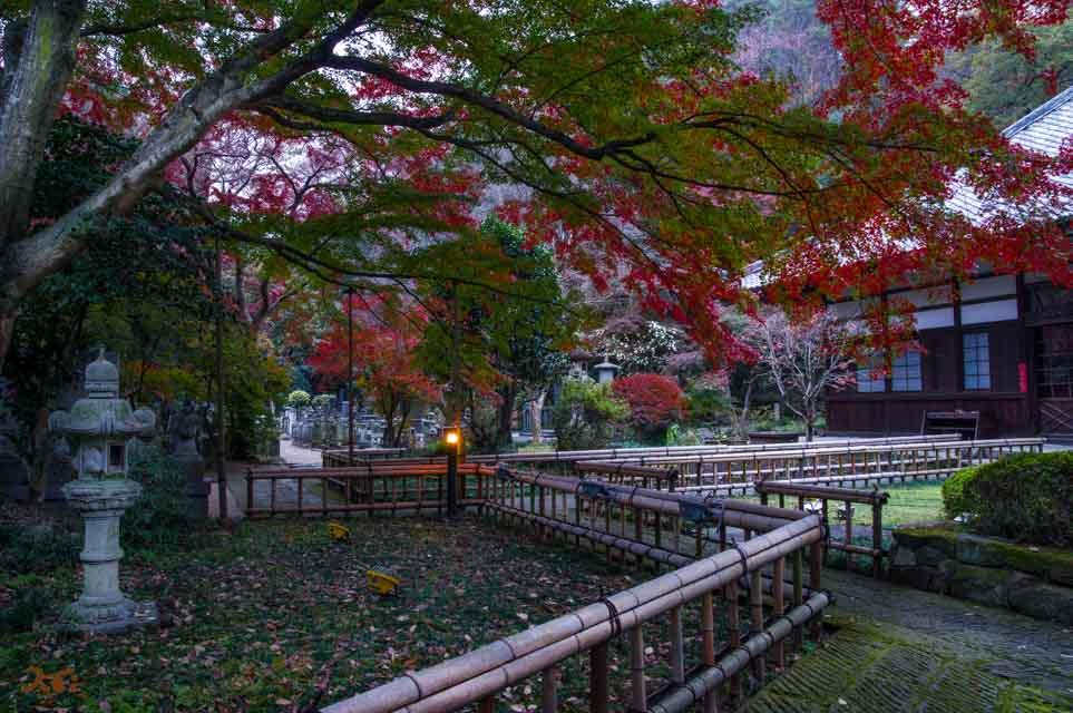 20151123太田金龍寺の紅葉10