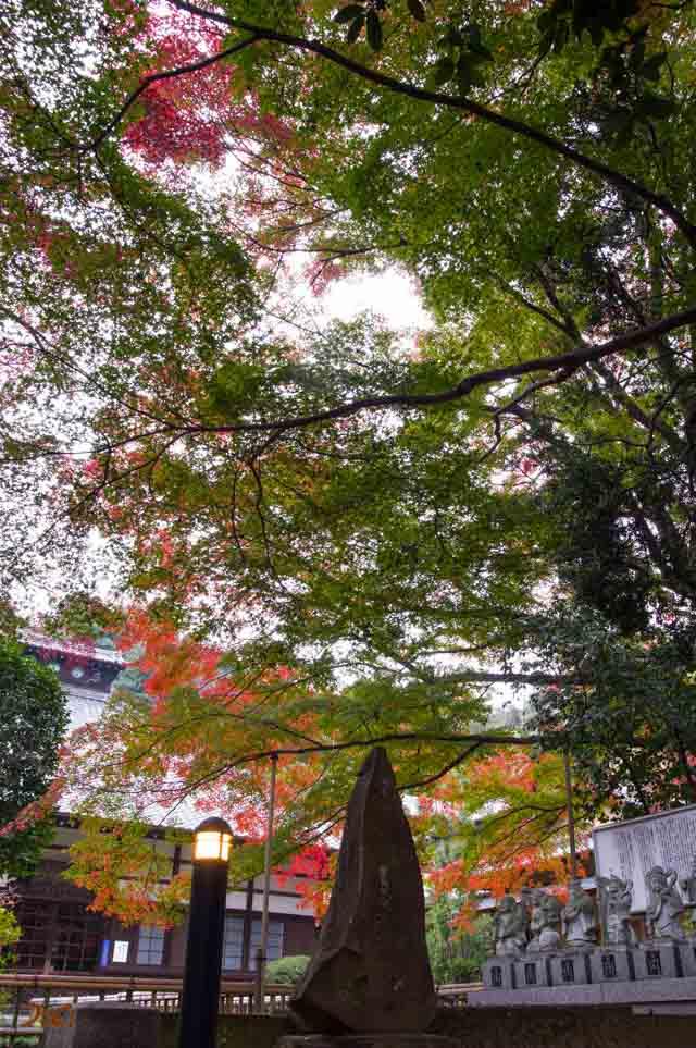 20151123太田金龍寺の紅葉03