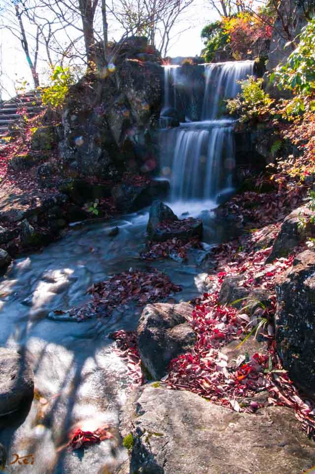 20151128冬桜_藤岡桜山公園09