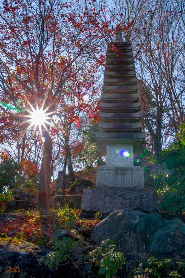 20151128冬桜_藤岡桜山公園10
