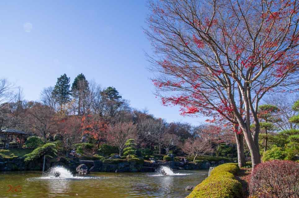 20151128冬桜_藤岡桜山公園02