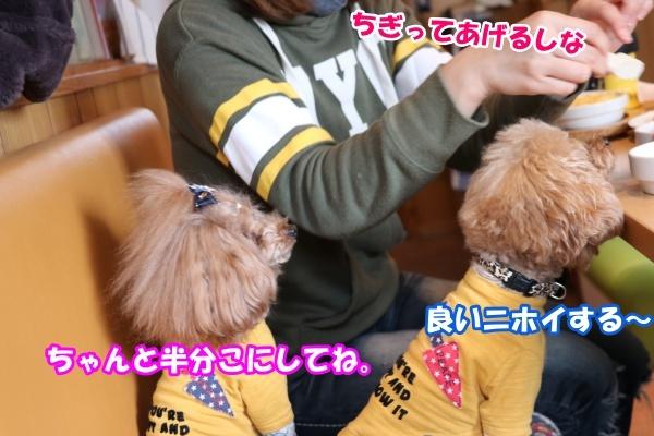 20180211あいべいさんささみステーキ実食福詩ちゃん1