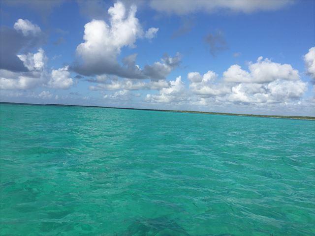 ウミガメ・マンタに出会えたきれいな海 コスメル島 Sea Turtle and Devilfish welcoming me in Cozmel Sea.