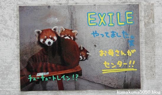 とくしま動物園_37