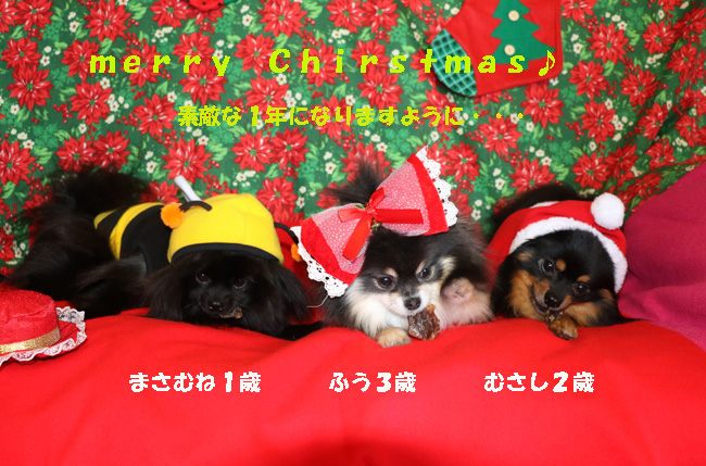 627-123-本番クリスマスカード2015-1-123