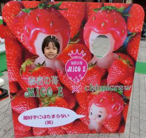strawberry festival 横浜赤レンガ倉庫 5