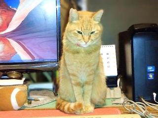 160222_3784「猫の日」のトラ美ちゃんVGA
