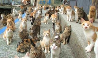 160227_愛媛県の青島に住む猫たち「全国へ餌募集」BBq4FoU_1024x611