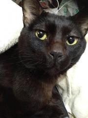 160223_17670147友人宅の飼い猫「キキちゃん」