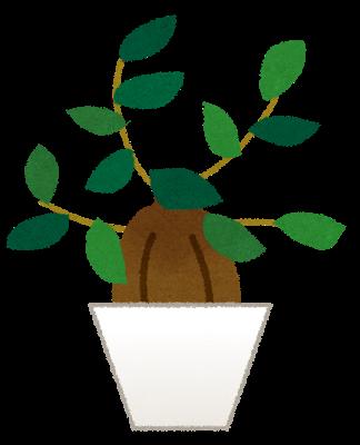 plant_gajumaru.png