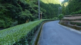 20150523炭焼平山線035